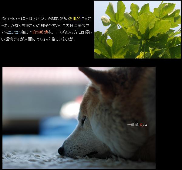お盆過ぎB.jpg