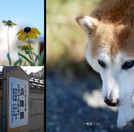 夏散歩B.jpg