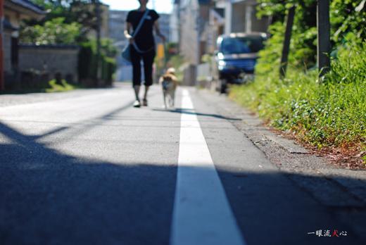 夏散歩F.jpg